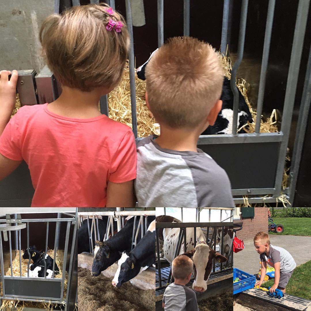 #goedemorgen365 met de #kleuters naar de #boerderij #koeien #kalfjes