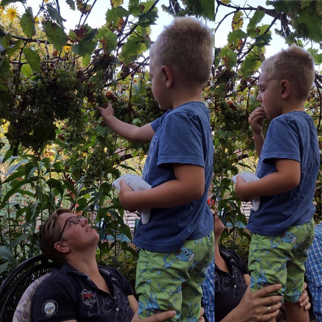 #goedemorgen365 #druivenplukken #mjammie #lekker